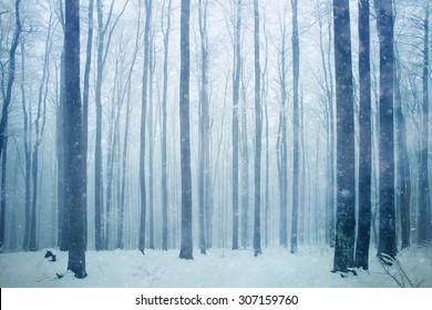 Snowfall in foggy beech forest landscape.