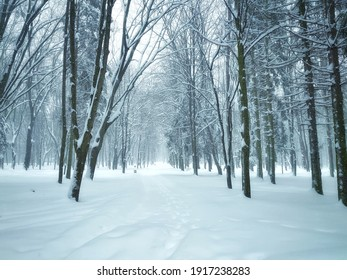 Snowfall in the forest, magical snowy forest in winter.
