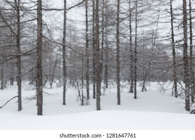 Snowfall on the background of snow-covered forest. Cold and snowy weather. The photo shows a lot of snowflakes and snowdrift. Magadan region, Russia. Shallow depth of field. Perfect for background.