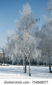 Snowfall. Tree branches covered with frost wonders. Snow on branches of trees in city Park on cloudy day. Winter is coming New year. Calm blurry snow flakes winter background with copy space.