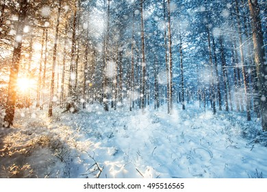 Snowfall in Winter Wonderland Forest at Sunset