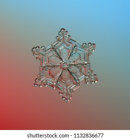 Snowflake glittering on blue background. Macro photo of real snow crystal: large star plate with six short, broad arms, glossy relief surface, fine hexagonal symmetry and complex inner pattern.