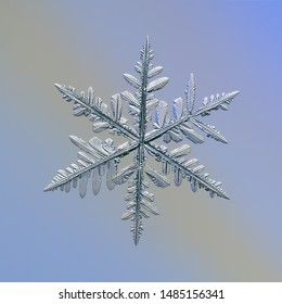 Snowflake glittering on blue gradient background. Macro photo of real snow crystal: complex stellar dendrite with elegant structure, glossy relief surface, ornate shape and intricate inner details.