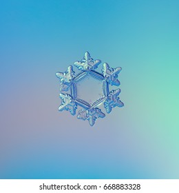 Snowflake glittering on blue gradient background in cold light. Macro photo of real snow crystal: star plate with six short, relief arms and large, flat and transparent hexagonal center.