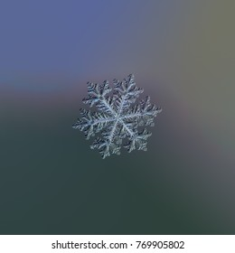 Snowflake glittering on dark gradient background. Macro photo of real snow crystal: large stellar dendrite with complex, elegant shape, fine hexagonal symmetry and long, ornate arms with side branches