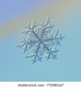 Snowflake glittering on light blue background. Macro photo of real snow crystal: large stellar dendrite with six long, elegant arms, glossy relief surface, fine hexagonal symmetry and ornate shape.