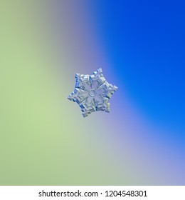 Snowflake glittering on smooth gradient background. Macro photo of real snow crystal: elegant star plate with fine hexagonal symmetry, six short arms, glossy relief surface and complex inner details.