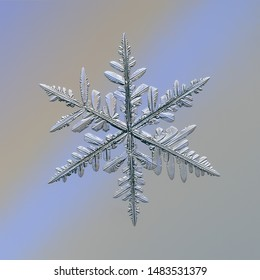 Snowflake glittering on smooth gradient background. Macro photo of real snow crystal: complex stellar dendrite with elegant structure, glossy relief surface, ornate shape and intricate details.