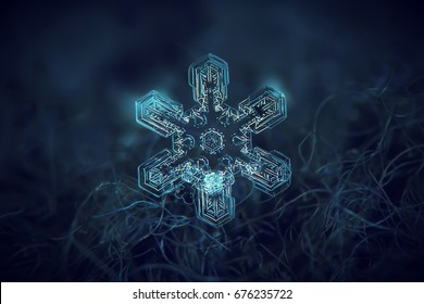Snowflake glowing on dark blue textured background. Macro photo of real snow crystal: large star plate with simple shape, six straight, broad arms and complex internal structure.