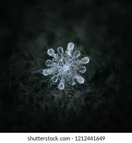 Snowflake glowing on dark gray textured background. Macro photo of real snow crystal: rare stellar dendrite with fine symmetry, twelve long arms, glossy transparent surface and complex inner details.