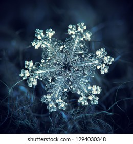 Snowflake glowing on dark textured background. Macro photo of real snow crystal: large stellar dendrite with glossy relief surface, thin, complex arms and tiny bubbles of frozen rime across crystal.