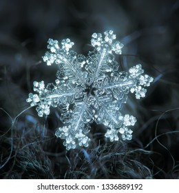 Snowflake glowing on dark woolen background. Macro photo of real snow crystal: big stellar dendrite with glossy relief surface, thin, complex arms and tiny bubbles of frozen rime across the crystal.