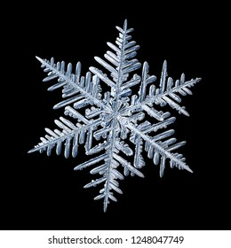 Snowflake isolated on black background. Macro photo of real snow crystal: elegant stellar dendrite with fine hexagonal symmetry, glossy relief surface, complex inner pattern and six thin, ornate arms.
