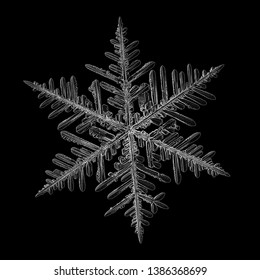 Snowflake isolated on black background. Macro photo of real snow crystal: elegant stellar dendrite with fine hexagonal symmetry, glossy relief surface, complex inner details and six thin, ornate arms.