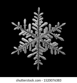 Snowflake isolated on black background. Macro photo of real snow crystal: elegant stellar dendrite with hexagonal symmetry, glossy surface, complex inner structure and six flat, ornate arms.
