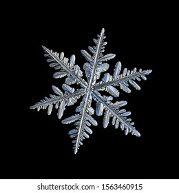 Snowflake isolated on black background. Macro photo of real snow crystal: elegant stellar dendrite with hexagonal symmetry, glossy surface, complex details and six thin, flat arms.