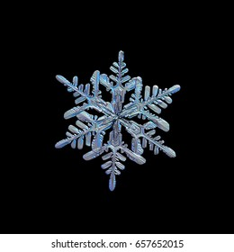 Snowflake isolated on black background. Macro photo of real snow crystal with complex, elegant shape, six ornate arms and lots of side branches. Snowflake glittering in cold blue light.