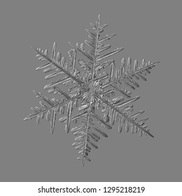 Snowflake isolated on gray background. Macro photo of real snow crystal: elegant stellar dendrite with fine hexagonal symmetry, glossy relief surface, complex inner details and six thin, ornate arms.