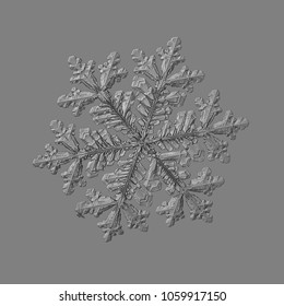 Snowflake isolated on uniform gray background. Macro photo of real snow crystal: big stellar dendrite with complex, ornate shape, hexagonal symmetry, long elegant arms and complex inner pattern.