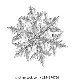 Snowflake isolated on white background. Macro photo of real snow crystal: large stellar dendrite with complex, ornate shape, fine hexagonal symmetry, long elegant arms and glossy relief surface.