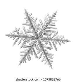 Snowflake isolated on white background. Macro photo of real snow crystal: elegant stellar dendrite with fine hexagonal symmetry, glossy relief surface, complex inner details and six thin, ornate arms.