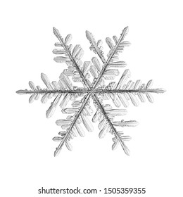 Snowflake isolated on white background. Macro photo of real snow crystal: elegant stellar dendrite with hexagonal symmetry, glossy relief surface, complex details and six thin, fragile arms.