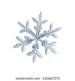 Snowflake isolated on white background. Macro photo of real snow crystal: small stellar dendrite with glossy surface, hexagonal symmetry, complex inner details and six flat, fragile arms.