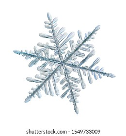 Snowflake isolated on white background. Macro photo of real snow crystal: elegant stellar dendrite with hexagonal symmetry, glossy relief surface, complex inner details and six flat, fragile arms.