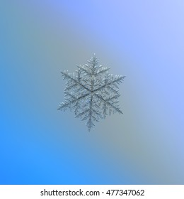 Snowflake on blue-gray gradient background. This is macro photo of real snow crystal: very large dendrite (around 8 millimeters) with complex structure, many side branches and fine symmetry.