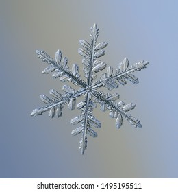 Snowflake on smooth gradient background. Macro photo of real snow crystal: complex stellar dendrite with elegant structure, glossy relief surface, ornate shape and intricate inner details.
