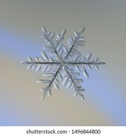 Snowflake on smooth gradient background. Macro photo of real snow crystal: complex stellar dendrite with elegant structure, glossy relief surface, ornate shape and intricate details.