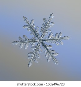 Snowflake on smooth gradient background. Macro photo of real snow crystal: complex stellar dendrite with elegant structure, glossy relief surface, six thin, fragile arms and intricate inner details.