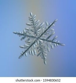 Snowflake on smooth gradient background. Macro photo of real snow crystal: complex stellar dendrite with elegant structure, glossy relief surface, six flat, fragile arms and intricate inner details.