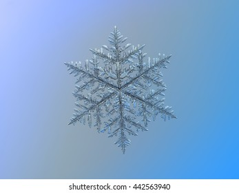 Snowflake on smooth gradient background: macro photo of real snow crystal on glass surface with LED back light. This is very large snowflake of fernlike dendrite type with complex structure of arms.
