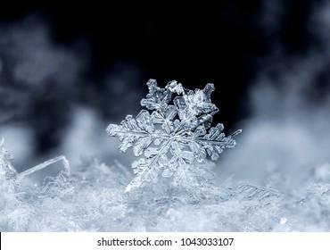 snowflake on snow, snow