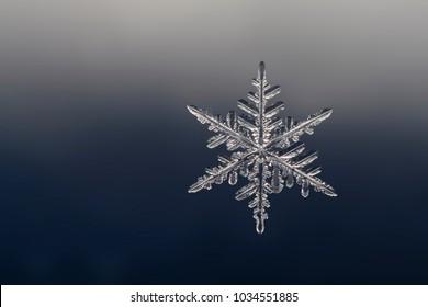 snowflake photo on a homogeneous background