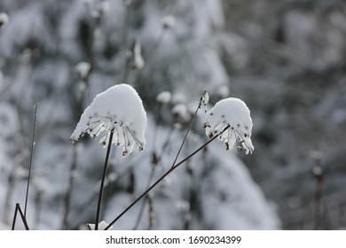 Snowflakes and ice entwined with wild plants