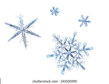 Snowflakes natural, set of isolated flakes on white background