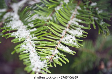 snowflakes on evergreen tree branch