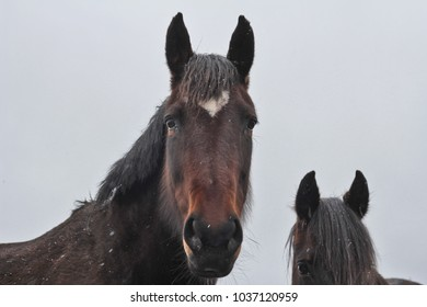 snowing on the horses