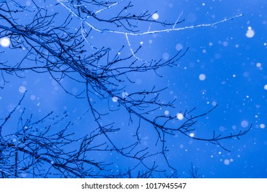 Snowing scene with branches on a blue evening sky-nature photography.