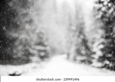 Snowing snowflakes against winter forest.