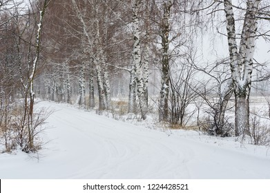 snowing winter birch trees alley in pastel colors and foggy background, deadpan style