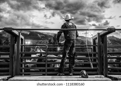 Snowmass, Colorado, USA - June 10, 2018 : A professional bull rider in a cage just before competition.
