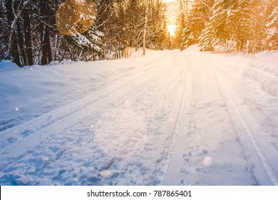 Snowmobile Tracks in Wild Forest of Cold Winter Sunset in Quebec, Canada