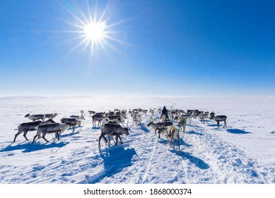 Snowmobile Trip over Finish Lapland - Shutterstock ID 1868000374