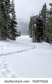 A snowshoe trail on top of the Grand Mesa near powerhorn in Colorado.
