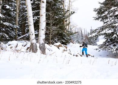 Snowshoeing Through Forest