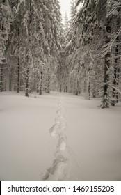 snowshoes steps in frozen winter forest bellow Slavic hill summit in Moravskoslezske Beskydy mountains in Czech republic
