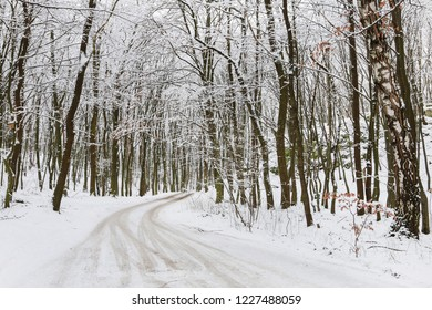 Snowstorm and mist in winter forest. Road through the woods.